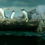 2011_niemcy_frankfurt_zoo_04