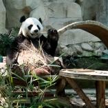 2012_tajlandia_zoo_03