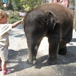 2012_tajlandia_zoo_05