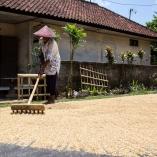2013_indonezja_ubud_10