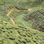 2013_malezja_cameron_highlands_03