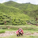 2013_malezja_cameron_highlands_06