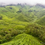 2013_malezja_cameron_highlands_13