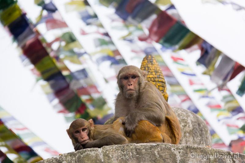 2013_nepal_kathmandu_swayambhunath_14