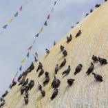 2013_nepal_kathmandu_swayambhunath_08