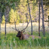 2014_usa_yellowstone_wildlife_06