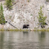 2014_usa_yellowstone_wildlife_09