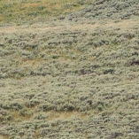 2014_usa_yellowstone_wildlife_11
