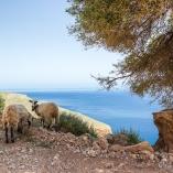 2015_grecja_kreta_na_wlasna_reke_05