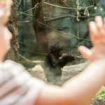 Zoo we Frankfurcie