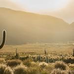 W krainie kaktusów