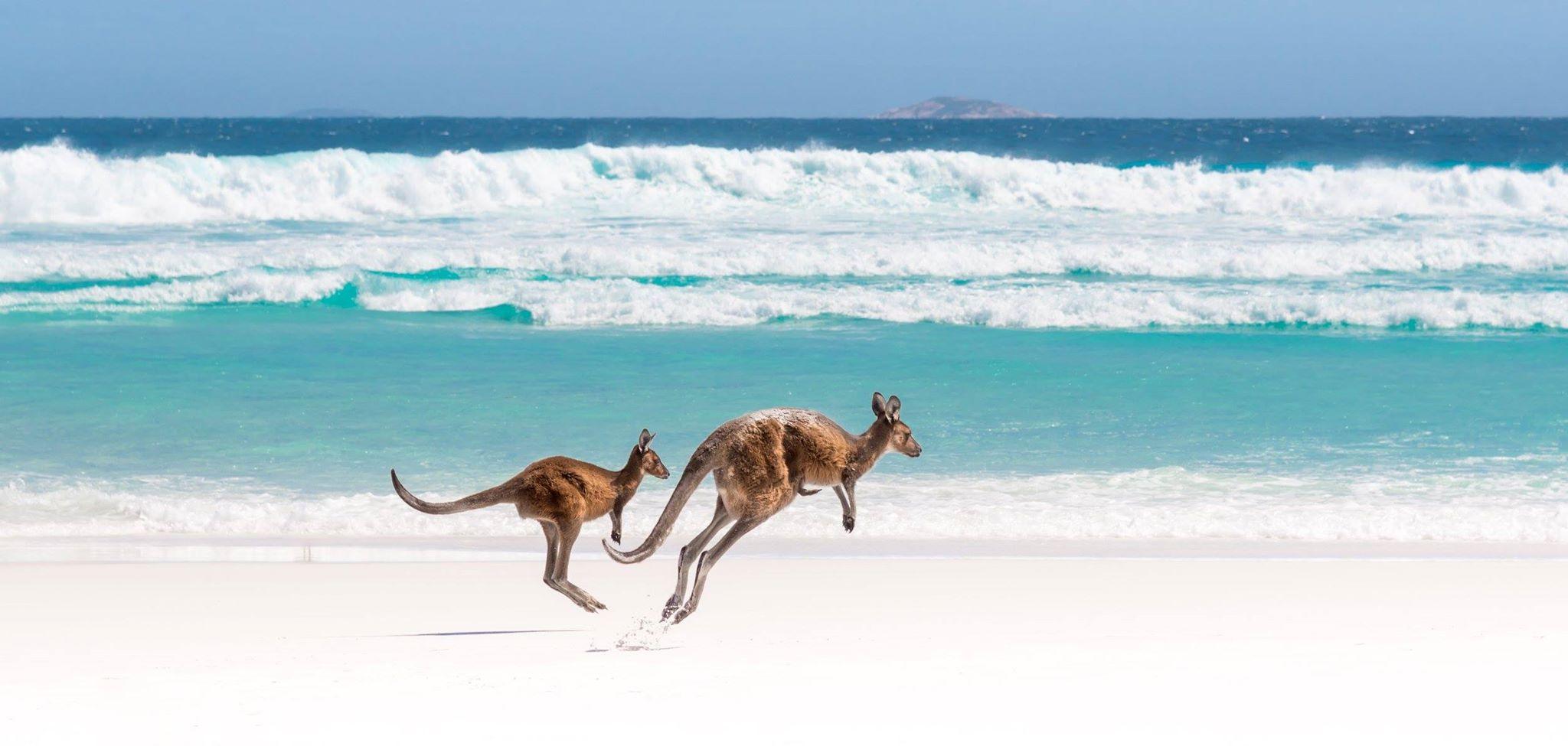 Zimujemy w Australii!!!