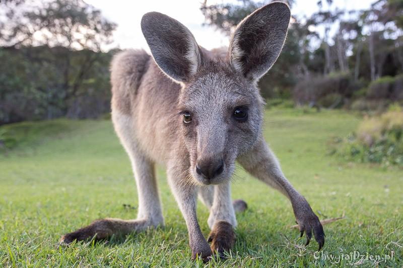 rp_2016_australia_wschodnie_wybrzeze_40.jpg