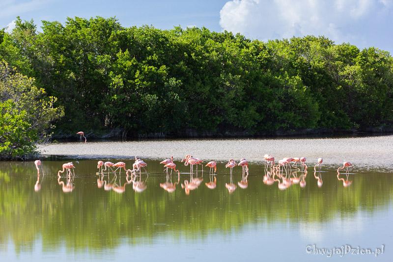 Dzikie Cayos czyli Kuba poza utartym szlakiem