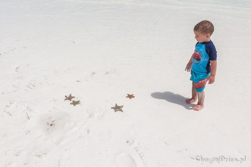 Plaża wielogwiazdkowa